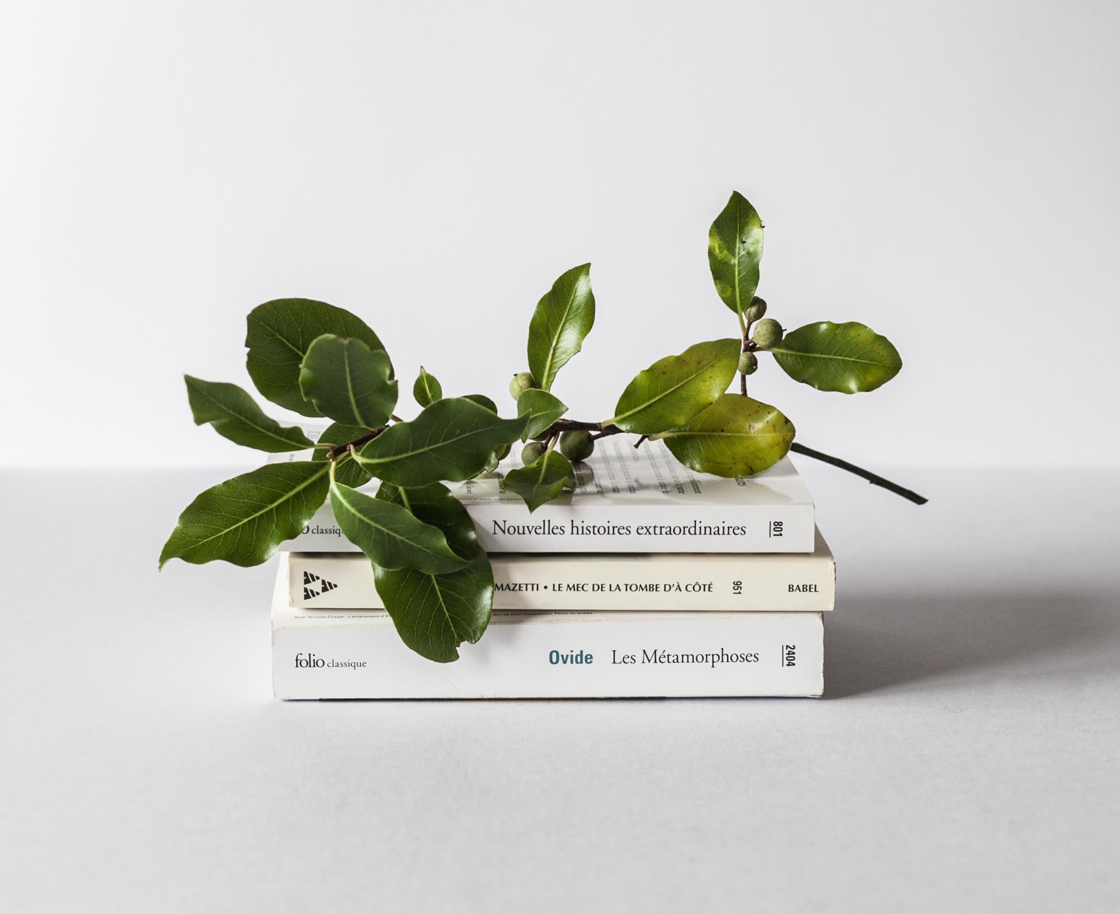 Pubblicare un libro – Meglio il crowdfunding oppure una casa editrice?